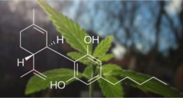 CBD Oil – A Compound with Healing Effects