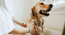 Safety Tips For Using Flea And Tick Treatment For Dogs